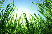 Groene gazon — Stockfoto