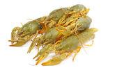 Crawfish — Foto Stock