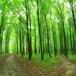 Green forest — Stock Photo #8994514