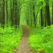 Green forest — Stock Photo #8994554