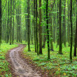Green forest — Stock Photo #8994631