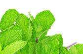 Mint on white — Stock Photo