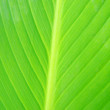 Leaf natural background - Foto Stock