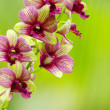 Beautiful orchid — Stockfoto