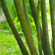 Bamboo — Stock Photo #9455776