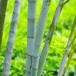 Bamboo — Stock Photo #9455784
