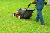 芝生を刈る — ストック写真
