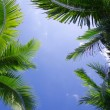 Palm tree — Stock Photo #9580085