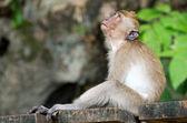 Monkey — Стоковое фото
