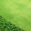 Green grass — Stock Photo #9773742