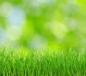Zelené pozadí — Stock fotografie