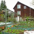 Spring kitchen garden — Stock Photo