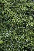 Lindas folhas verdes para design — Foto Stock