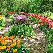 Botanical garden among tulips in Moscow — Stock Photo