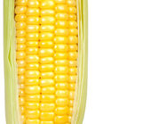 Corn on white background — Stock Photo