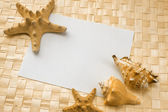 Muszle na białą kartkę papieru — Zdjęcie stockowe