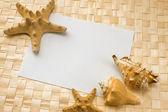 Seashells on a white sheet of paper — Stock Photo