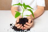 Grön växt — Stockfoto