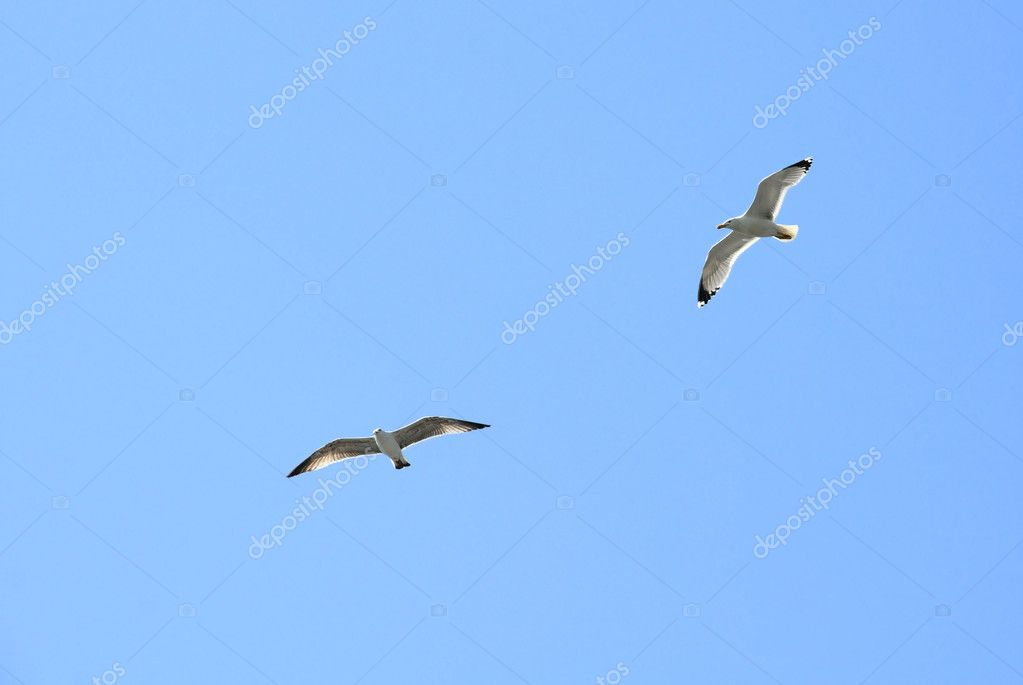 Two seagulls fly together against the blue sky background — Stock Photo #10619988