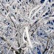 Closeup Snowy Twigs — Stock Photo