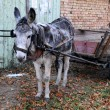 Gray Donkey and Cart — Stock Photo