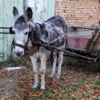 Gray Donkey and Cart — Stock Photo #8985569