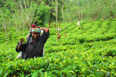 Young Tamil Girl At The Tea Plantation — Stock Photo