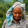 Portrait of Aged Tamil Tea Picker — Stock Photo