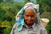 Yaşlı tamil çay seçici portresi — Stok fotoğraf