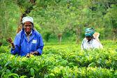 Twee tamil thee plukkers — Stockfoto