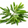 Foto Stock: Rosemary on a white background