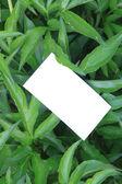 Folhas verdes com cartão vazio — Foto Stock