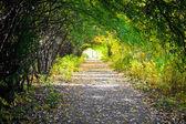 Walkway with trees — Stock Photo