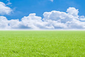 Beautiful field with a green grass and the beautiful sky on horizon with fluffy clouds — Stock Photo