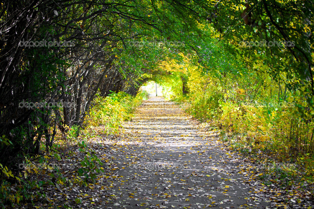 Walkway with trees — Stock Photo #10544053