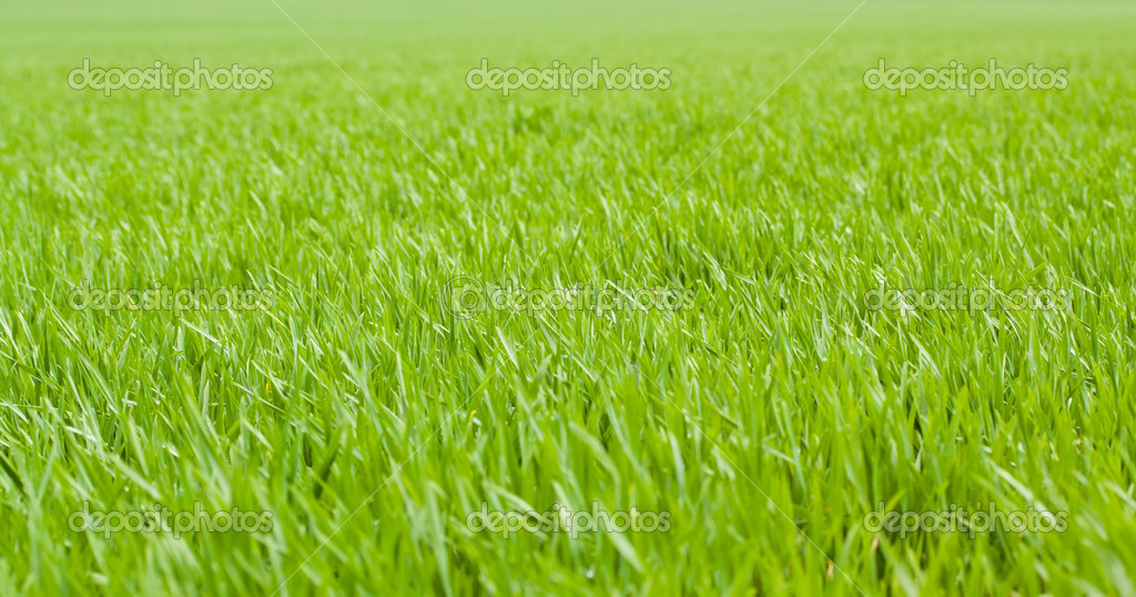 Green grass background — Stock Photo #10544144