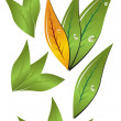 Royalty-Free Stock Imagen vectorial: Leaves