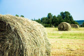 Hay stacks on the field - Summer rural landscape — Stock Photo