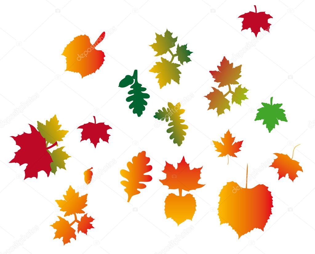 Fall Leaves - Vector Nature — Stock Vector #9067024