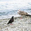 Stock Photo: Sea-gull