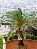 пальмы в храм бахаи в хайфе — Стоковое фото