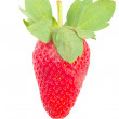 Strawberry with leaves — Stock Photo #9701838