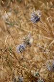 Weeds — Stock Photo