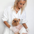 Veterinary doctor and a dog — Stock Photo