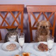 Stock Photo: Banquet for animals
