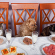 Feast for the animals - Stock Photo