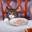 Feast for cat — Stockfoto
