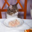 Restaurant  for cat - Stock Photo