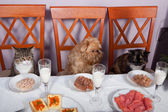 Feast for the animals — Stock Photo