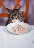 Restaurant for cat — Stock Photo